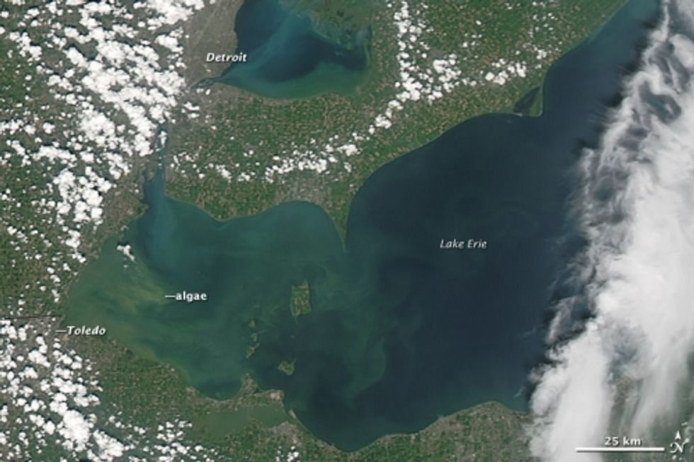A satellite view of a harmful algae bloom on Lake Erie in October 2011. Credit: NASA Earth Observatory.
