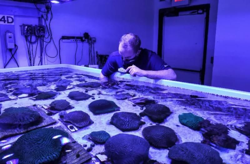 Scientists race to save Florida coral reef from mysterious disease