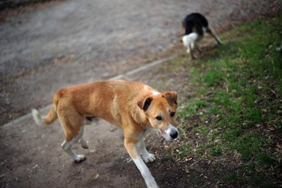 China investigating claims that over 100 stray dogs were buried alive
