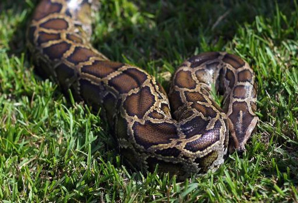 Woman fights python to save pet dog in Hong Kong