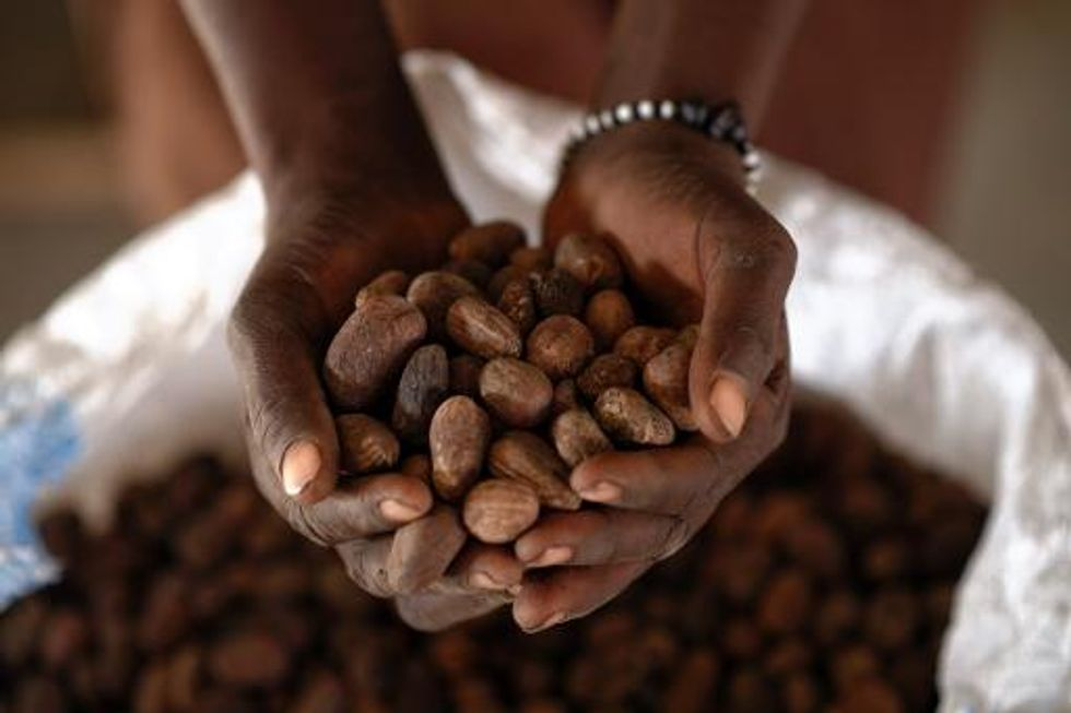 Booming demand for shea butter in the West reduces poverty for women in Western Africa
