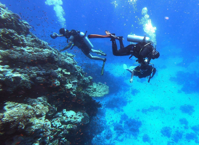 In Egypt's Red Sea, corals fade as oceans warm