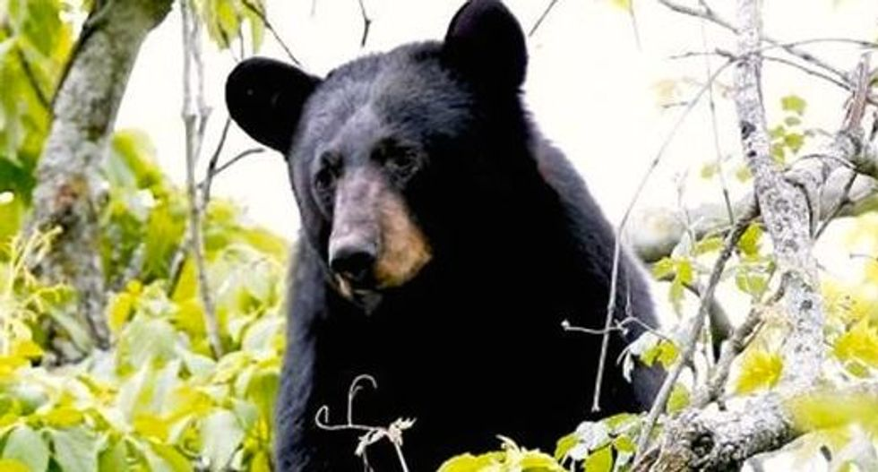Woman freaks as bear strolls through NJ neighborhood