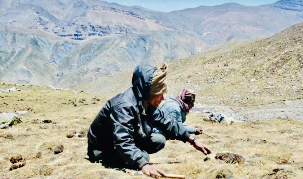 Pandemic shuts down Nepal's 'Himalayan Viagra' harvest