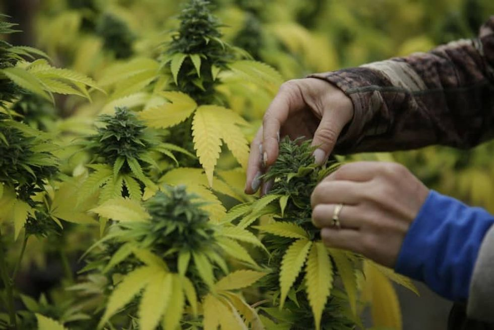 Key cannabis chemical may help prevent colon cancer: researchers