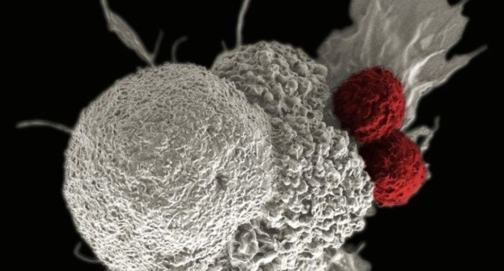 US regulator says too many drugmakers chasing same cancer strategy