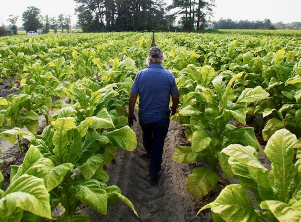 US farmers scramble to harvest crops as hurricane looms