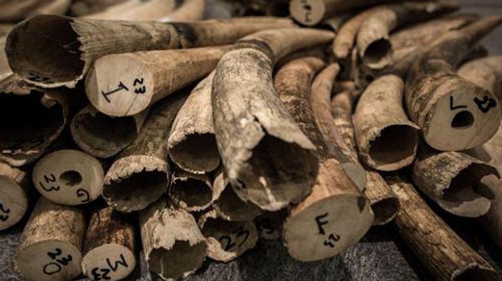 Hong Kong seizes elephant tusks worth $1 million