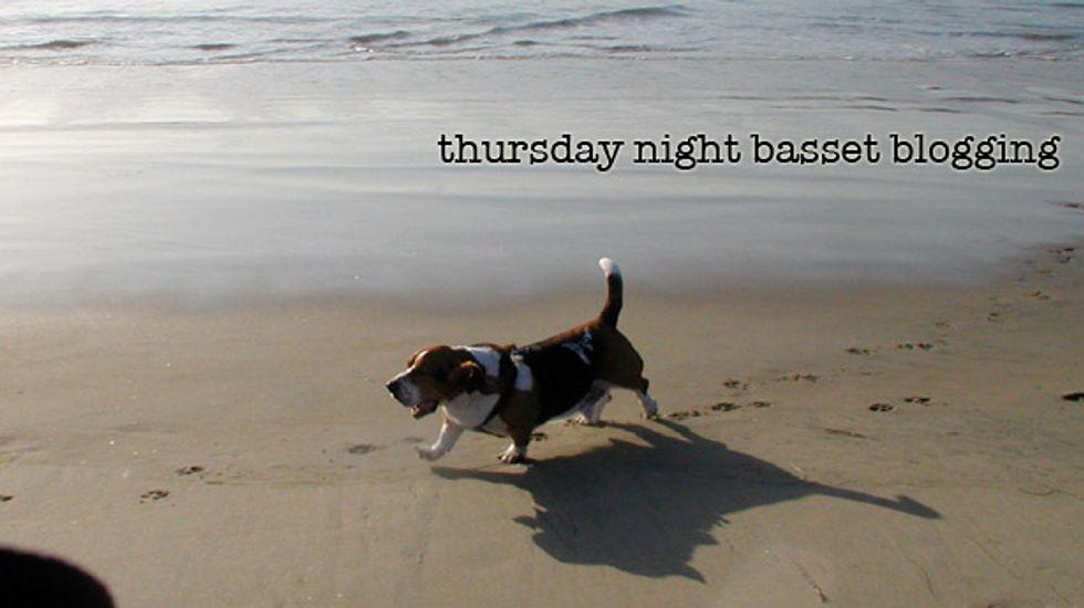 Thursday Night Basset Blogging