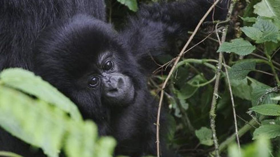 British oil company endangering Africa's most biodiverse area: WWF