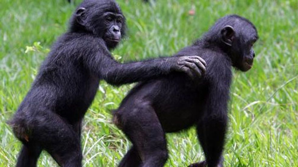 Study shows functional similarity between human and ape emotions