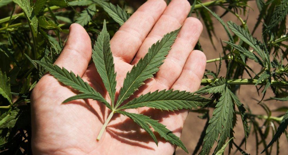 Marijuana ballot initiatives put medical and recreational users at odds