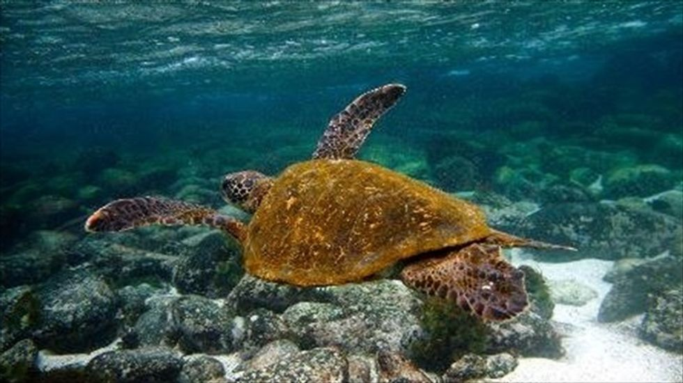 Galápagos wildlife threatened by battle between locals and scientists over tourist souvenirs