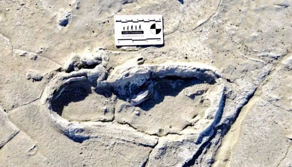 Making tracks: ancient footprints shed light on early humans