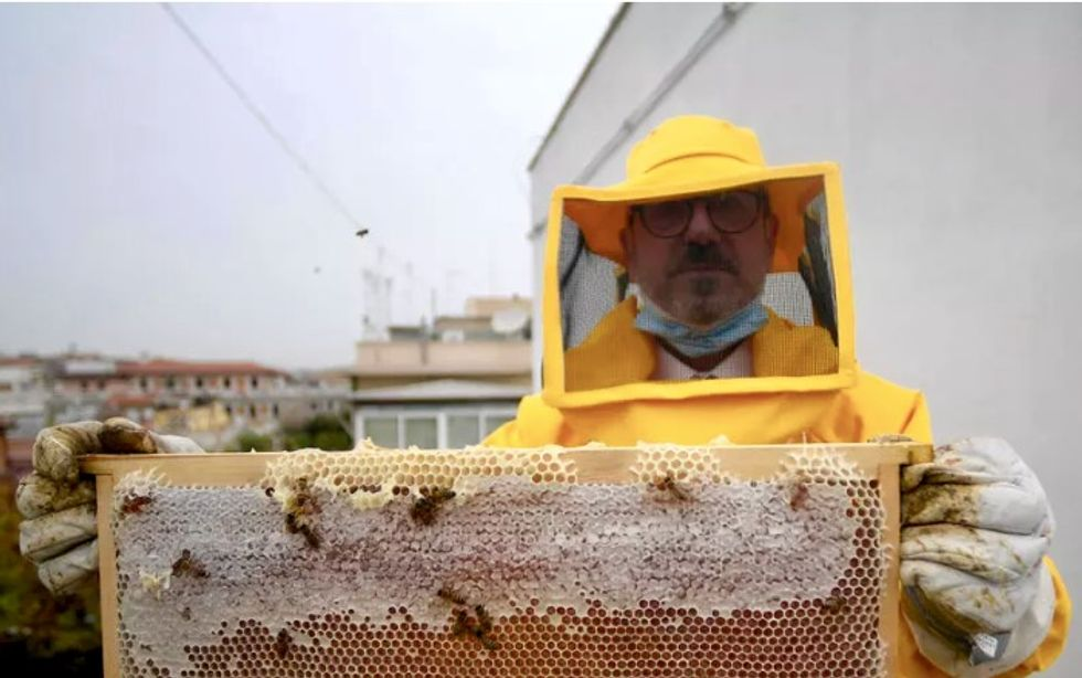 Honey bees thrive in locked-down Rome