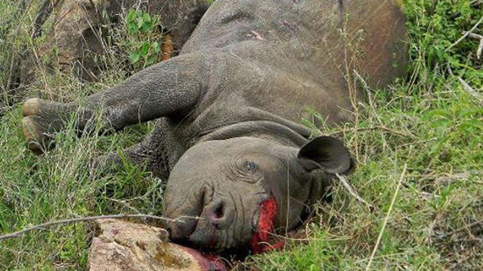 Dallas Safari Club raises $350,000 in controversial auction for permit to kill Namibia black rhino