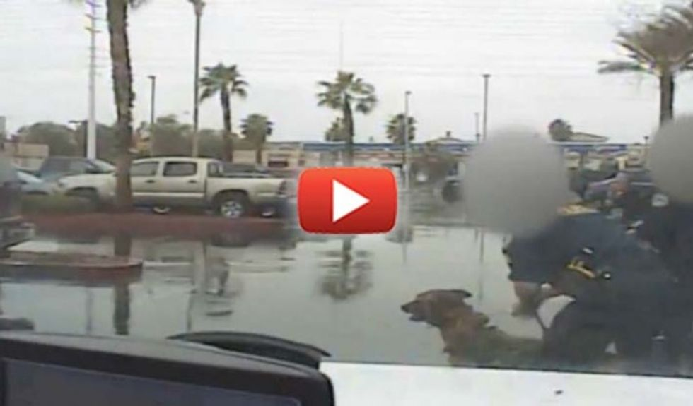 Horrifying video shows cops sic K-9 on infant daughter of a man they mistook for a suspect