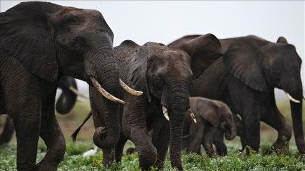 France will increase penalties for ivory traders
