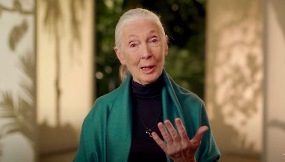 Jane Goodall warns humanity will be 'finished' after COVID-19 without ending 'absolute disrespect for animals and the environment'