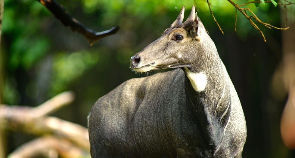 Founder of New York safari park trampled to death by antelope