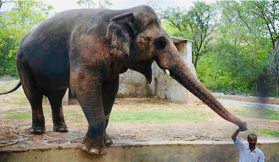 'I have to sit Down': Cher tweets joy as Pakistan agrees to free lonely elephant Kaavan