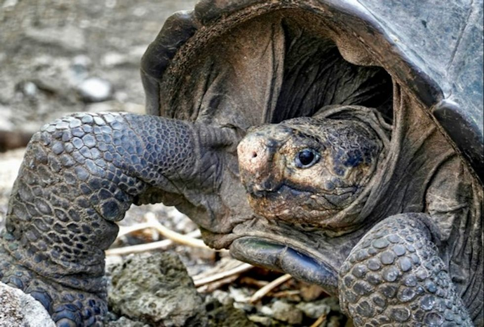 Giant tortoise thought extinct is found on Galapagos