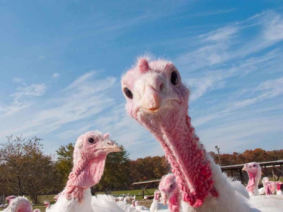 Minnesota -- the nation's top turkey producing state -- finds third bird flu infection in commercial poultry