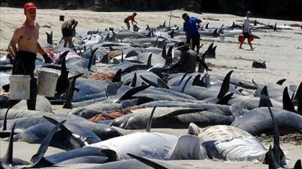 50 more whales beach themselves on notorious New Zealand beach