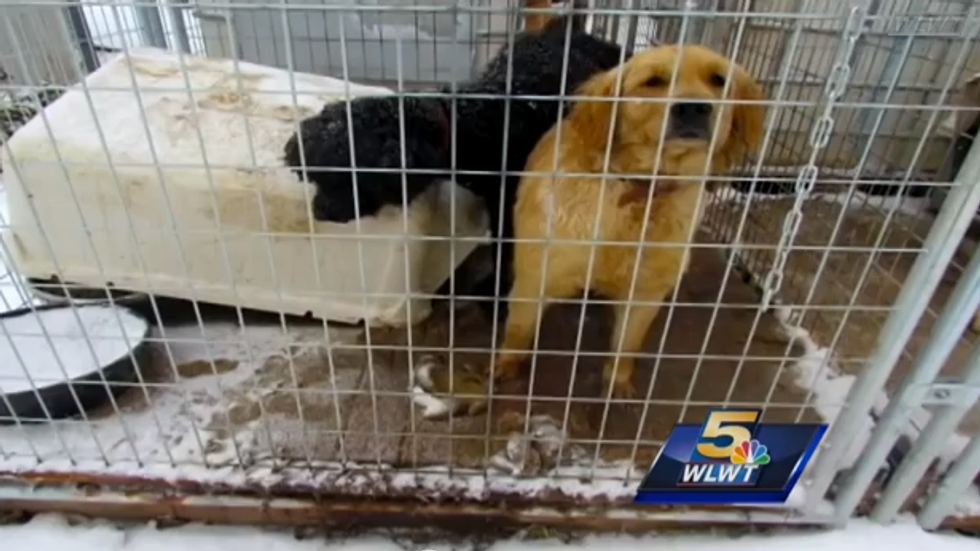 Dogs and cats removed from deplorable conditions at outdoor Kentucky puppy mill