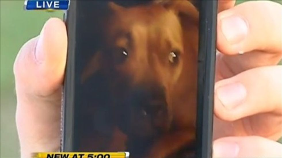 Florida cop not disciplined after shooting family dog dead in front of 2-year-old