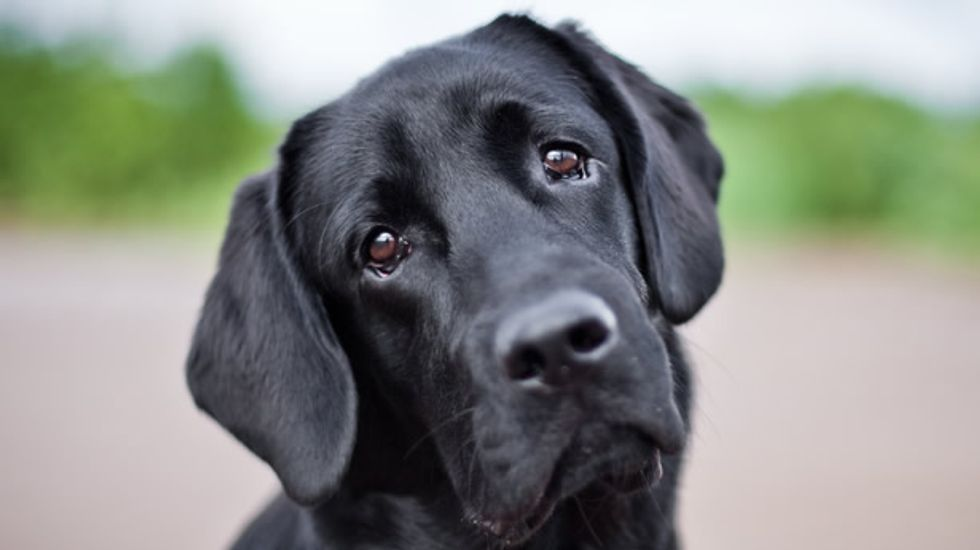 Scientists hope to root out disease in your dog via genetic sequencing