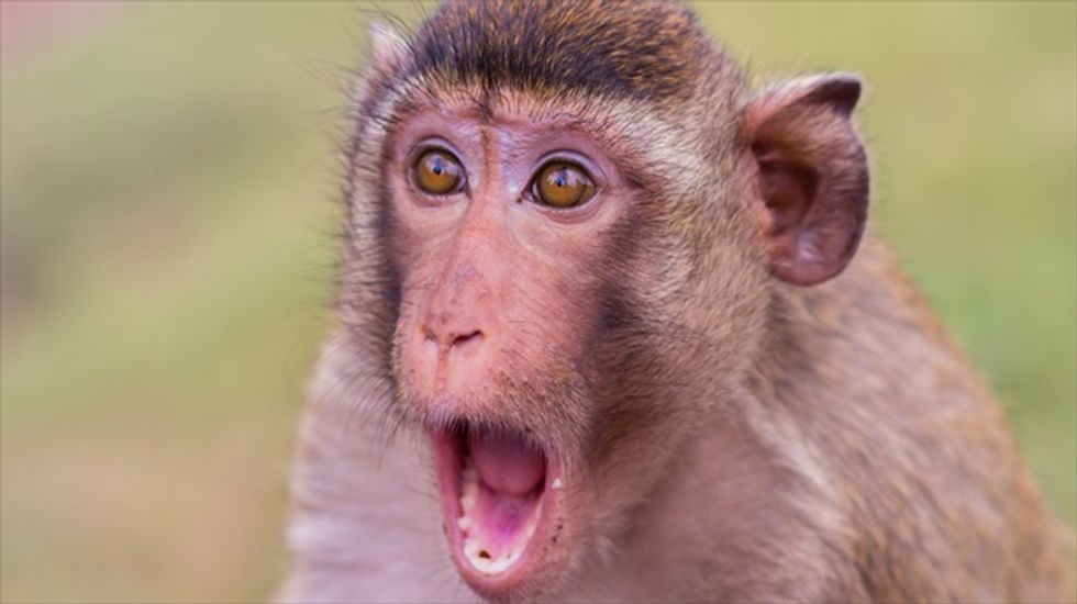 Indian couple plan to leave their wealth to pet monkey