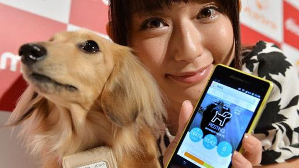 'Smart' high-tech dog collar goes on sale in Japan
