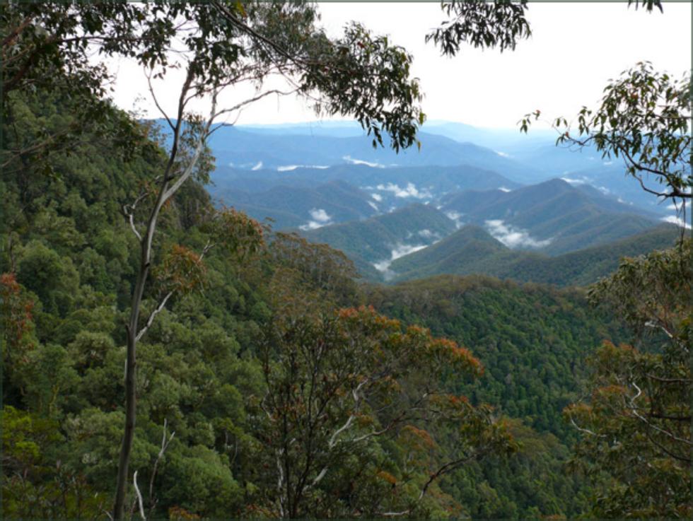 Abused subtropical rainforest thrives again