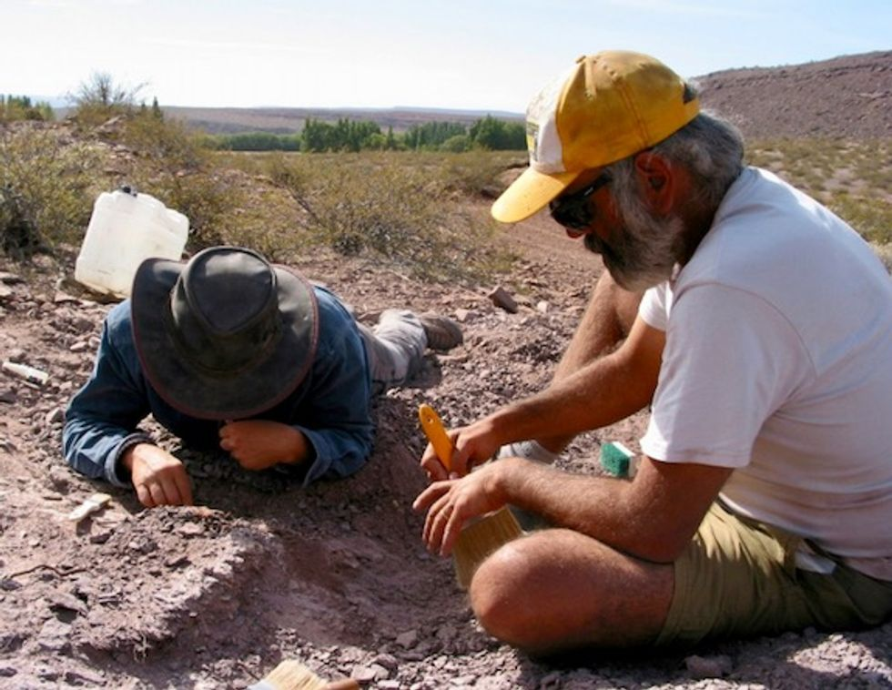 Paleontologists discover new sauropod species in Argentina