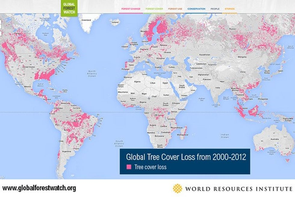 New online tool from Google lets you see deforestation in real time