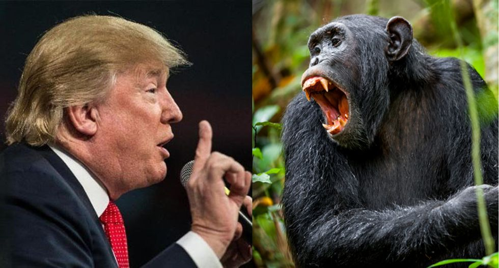 Anthropologist Jane Goodall: Trump's debate style reminds me of  'dominance rituals' of chimps