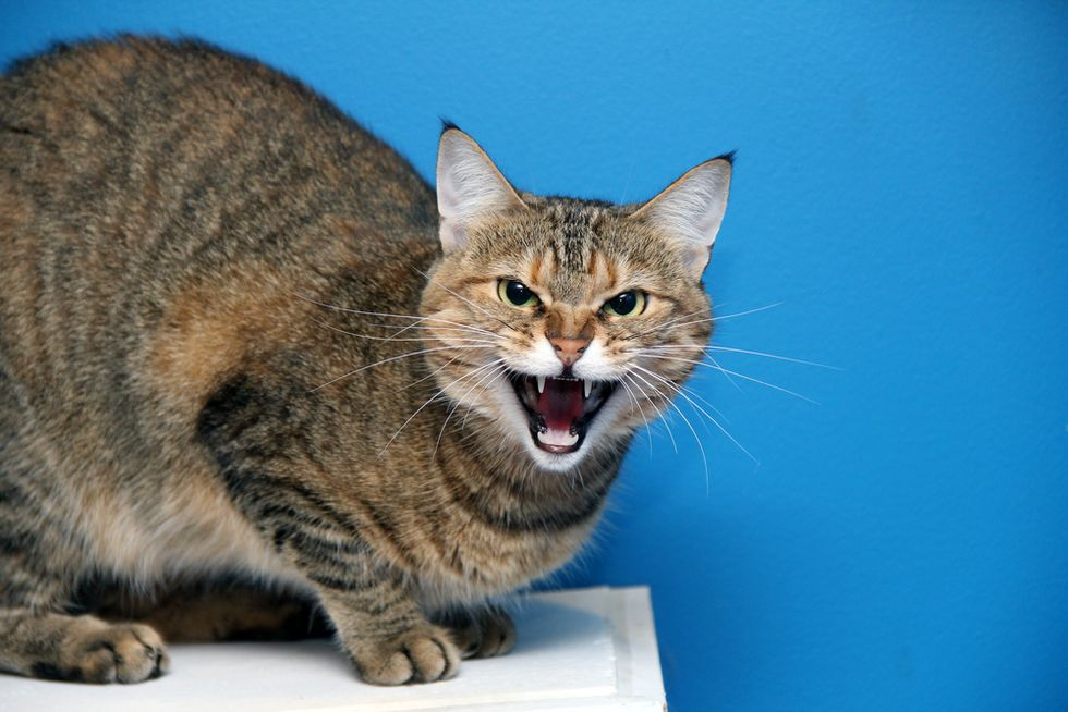 Purr-gatory awaits? Cathedral cat blamed for dog attacks