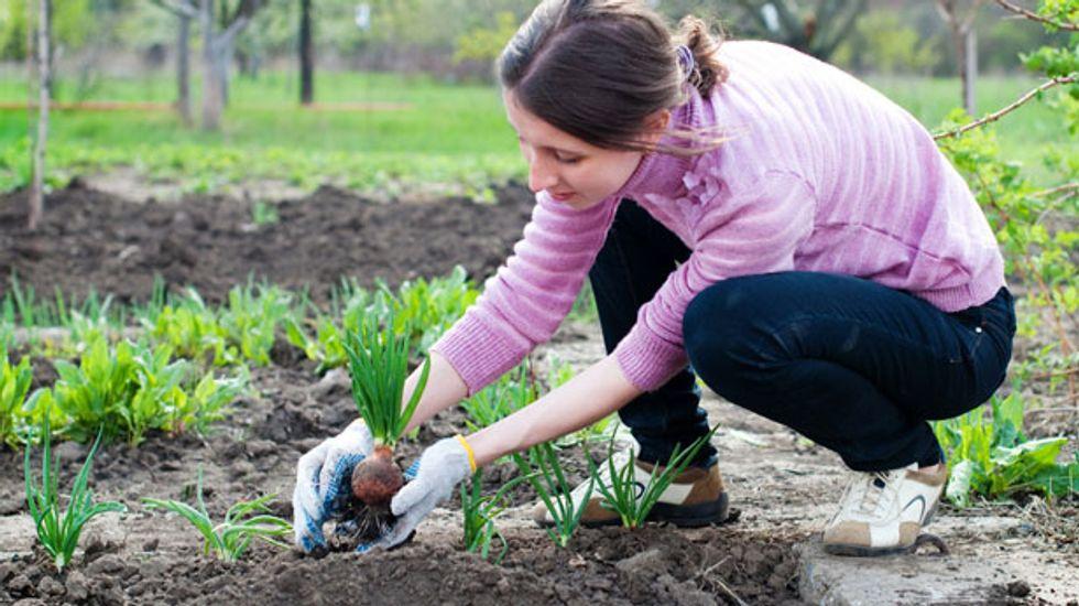 Farmer defeats Georgia regulators in legal battle over Vidalia onion