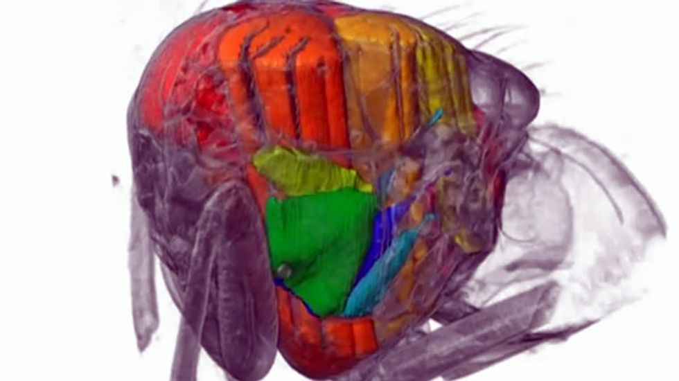 WATCH: Scientists use particle accelerator to capture secrets of blowfly's wingbeats