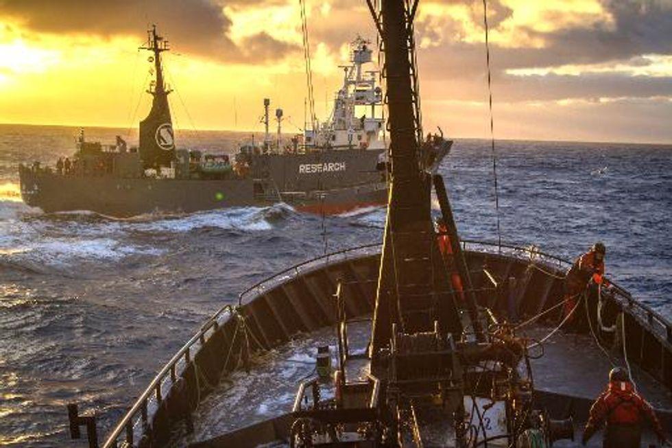 Top UN court orders Japan to end Antarctic whale hunt