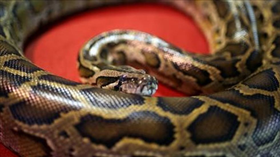 Kentucky cop saves pet shop owner from 20-foot python because he knew better than to shoot