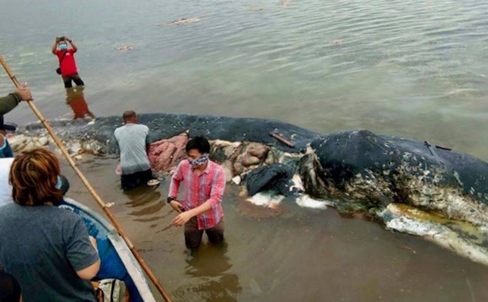 Dead sperm whale in Indonesia found with 13 pounds of plastic in stomach