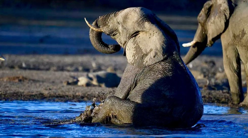 Marijuana test for stressed-out Warsaw Zoo elephants
