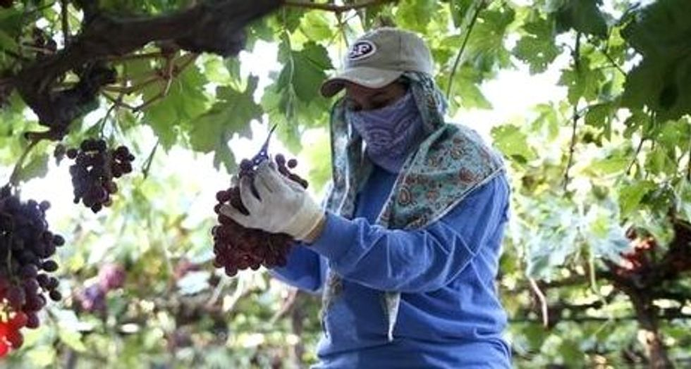 California first US state to promise overtime to farmworkers