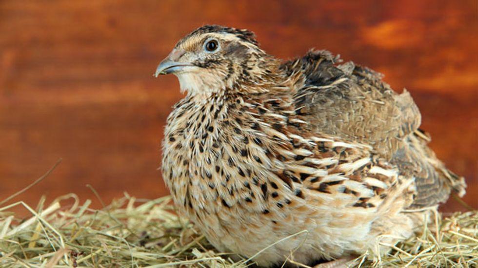Bird flu detected at California quail farm near San Francisco