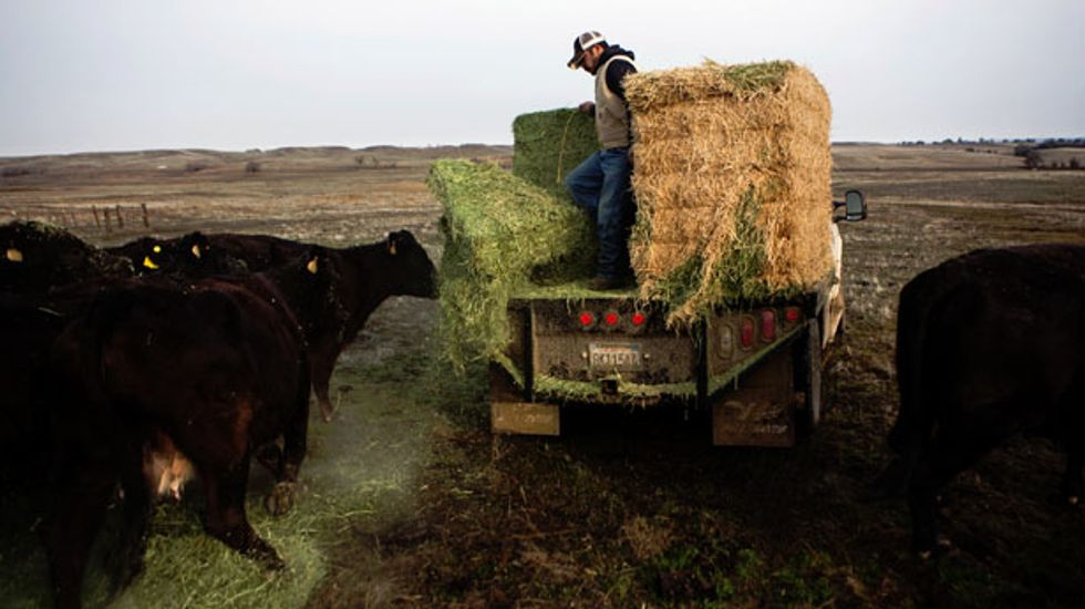 California cattle ranchers fleeing to Texas amid worst drought in decades