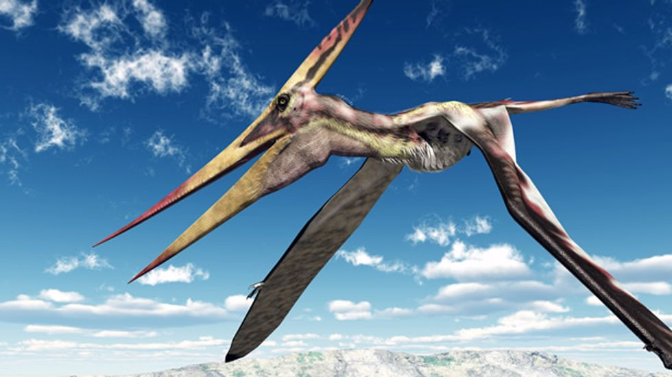 Rise of the pterodactyls becomes clearer with discovery of China's 'Krytopdrakon'