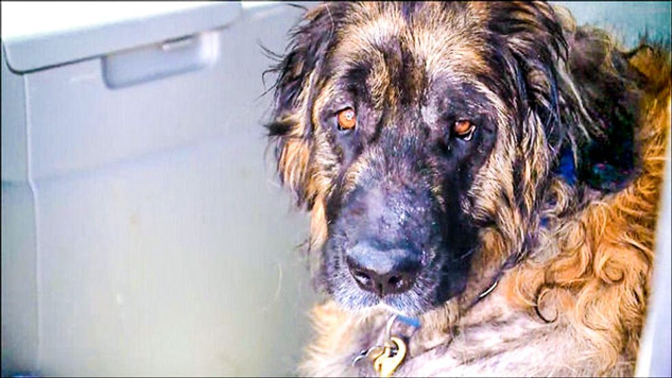 Texas clinic said dog had to be killed, then kept it alive for 6 months of experiments
