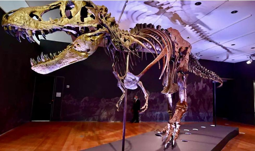 T-rex skeleton could fetch record price at New York auction